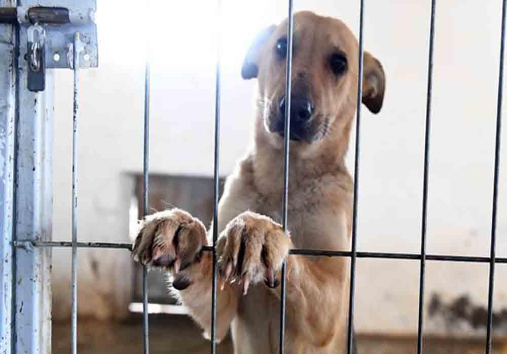 Aumenta el maltrato animal en un 400% en la última década