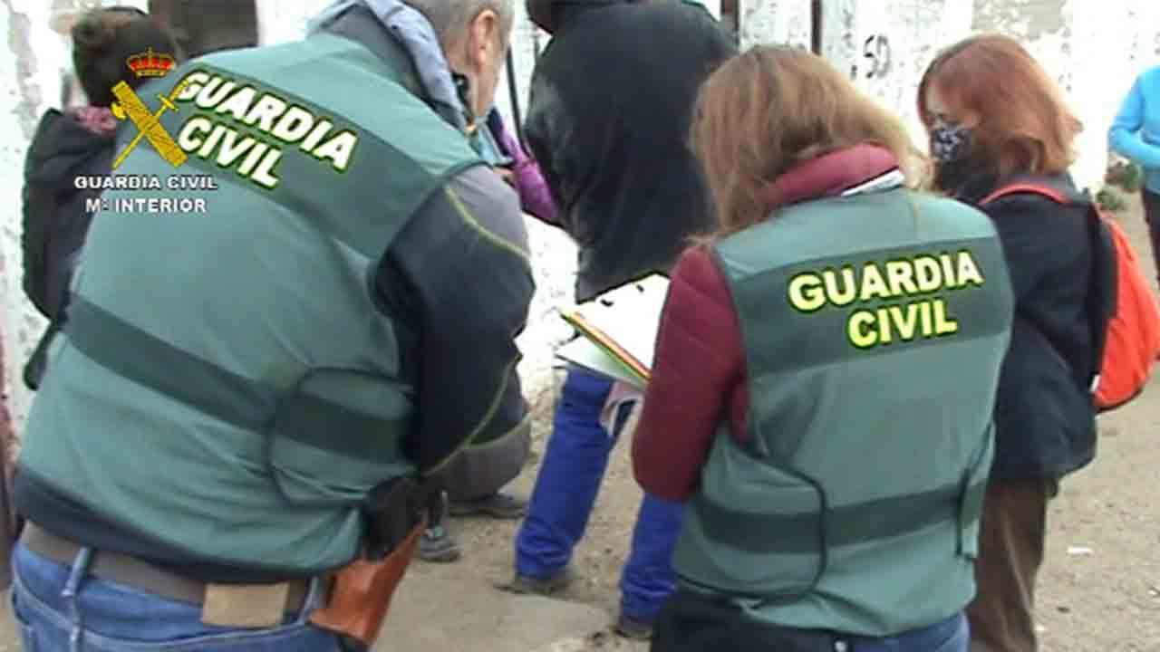 Clausurada una perrera clandestina en Madrid e intervenidos un centenar de perros