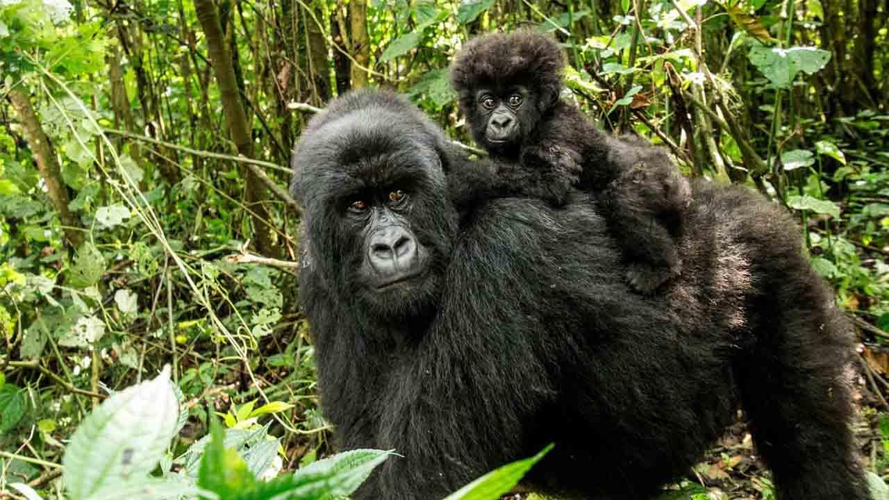 República Democrática del Congo: Seis guardabosques asesinados en una emboscada en el parque nacional Virunga