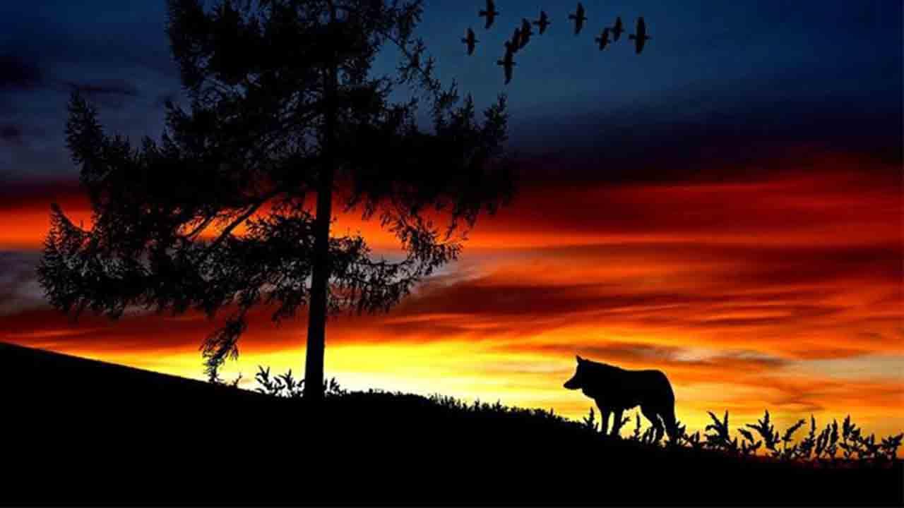 Modelo armonizado de conservación del lobo y cohabitación con la ganadería extensiva