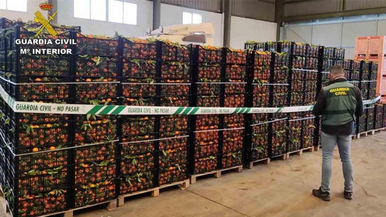 Intervenidas 12 toneladas de naranjas recogidas sin autorización