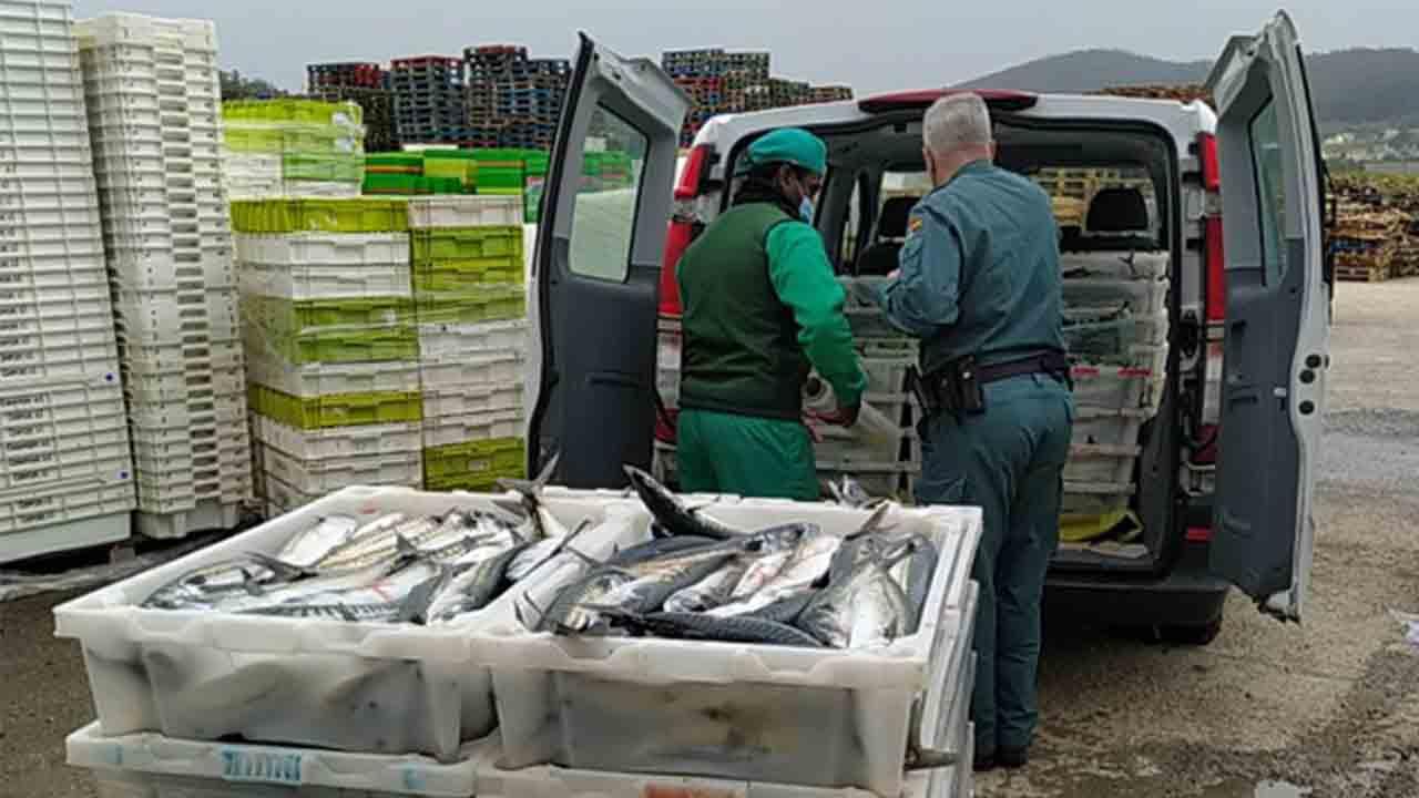 Decomisados 8.000 kilos de caballa de dos camiones en Lugo